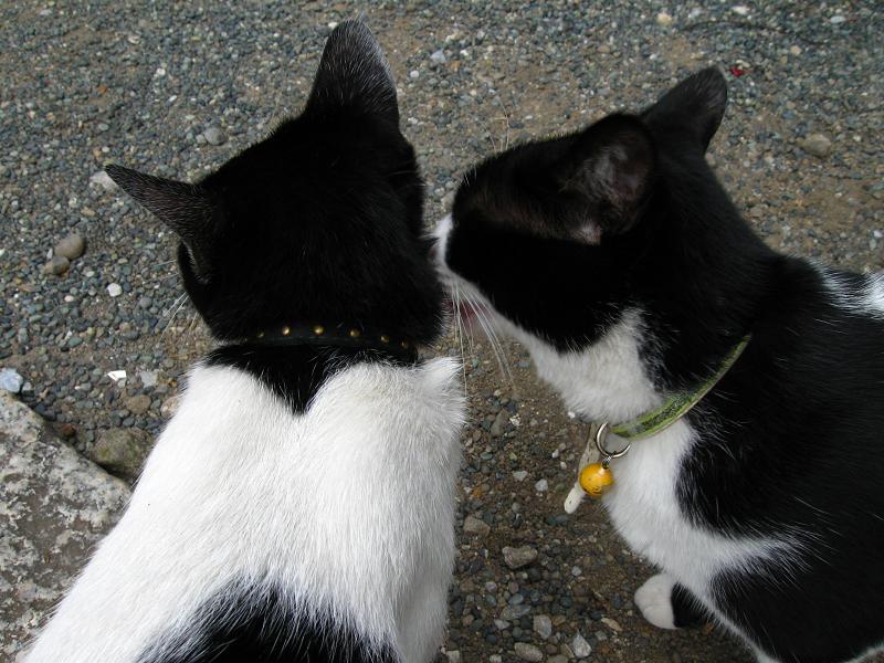 義理姉猫と義理妹猫2