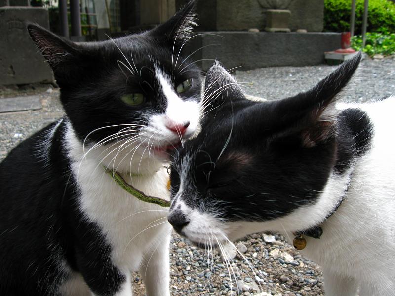 義理姉猫と義理妹猫4