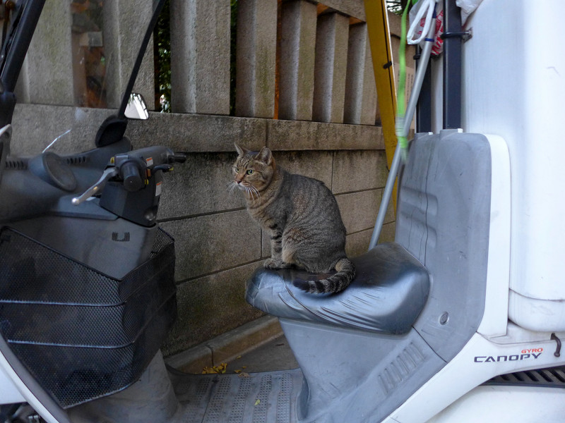 三輪スクーターとキジトラ猫1