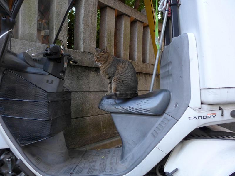 三輪スクーターとキジトラ猫2