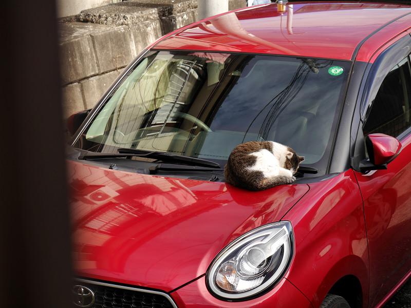 ボンネットで寝ているキジ白猫2