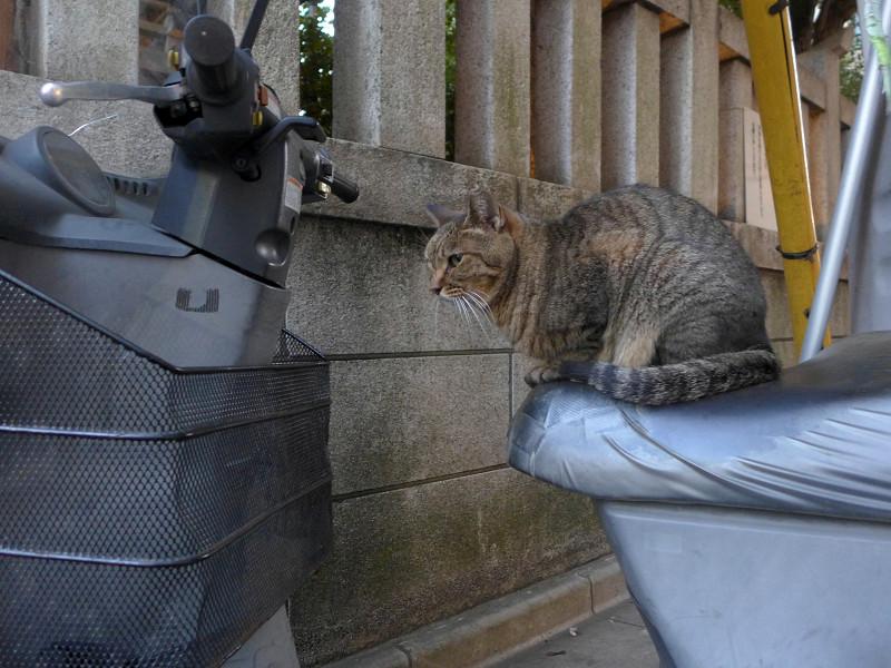 三輪スクーターとキジトラ猫3