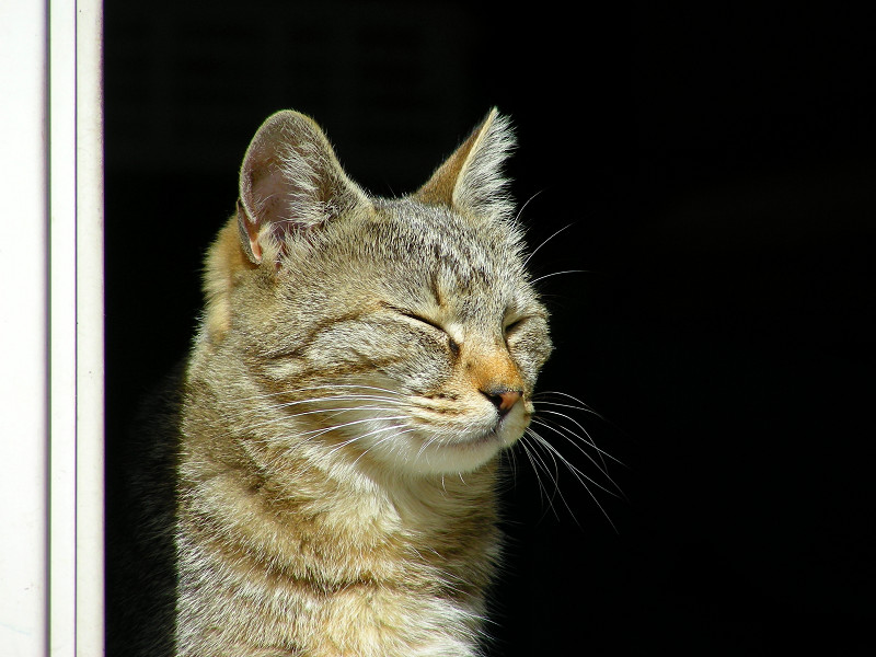 ポカポカなキジトラ猫1