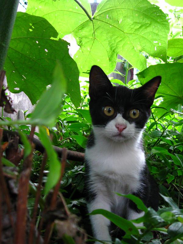 茂みの仔猫1