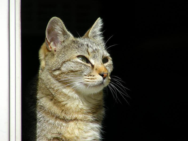 ポカポカなキジトラ猫2