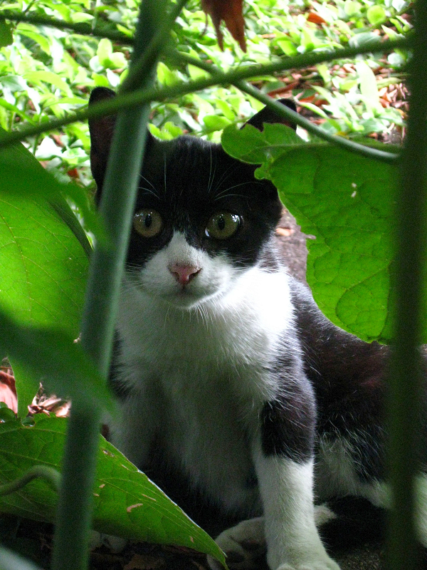 茂みの仔猫2
