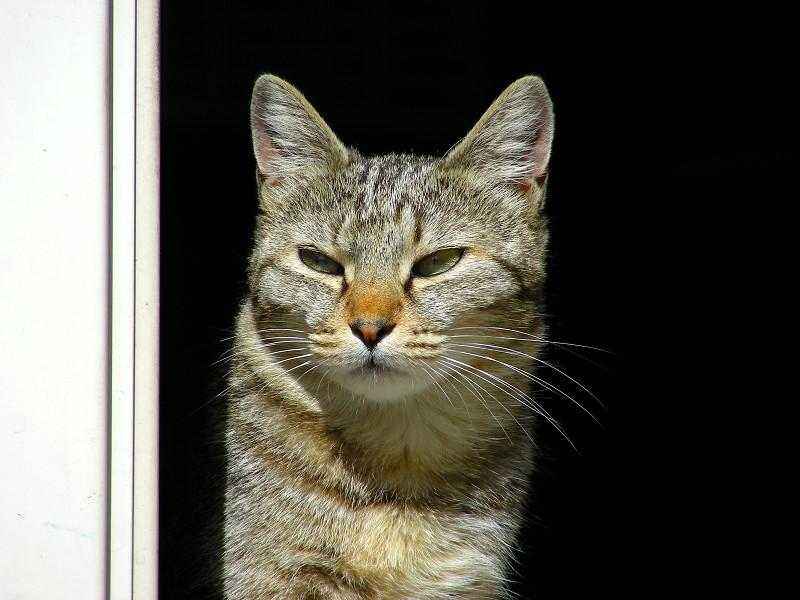 ポカポカなキジトラ猫3