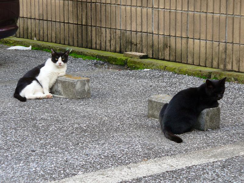 駐車場の猫たち3