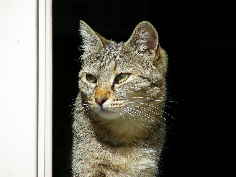 ポカポカなキジトラ猫4
