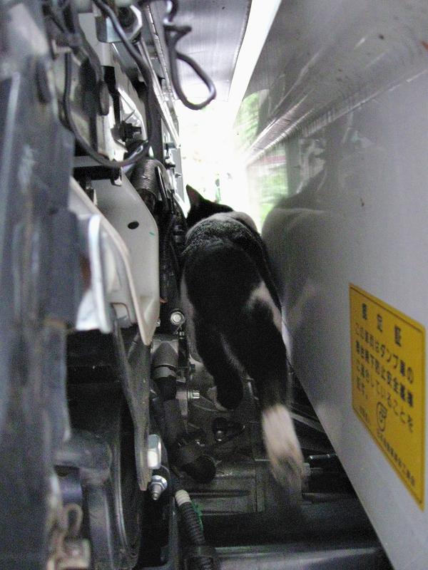 トラックを調べる白黒猫1