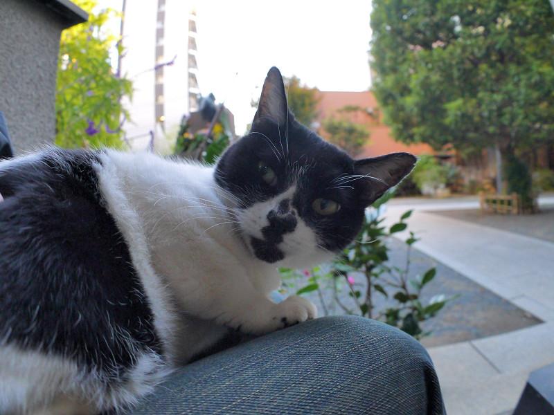 目が覚めた白黒猫1