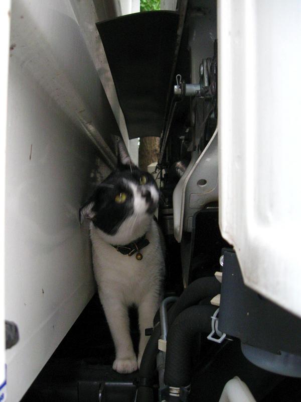 トラックを調べる白黒猫2