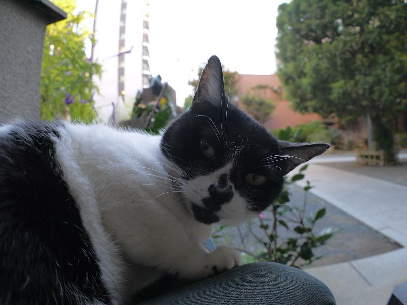 目が覚めた白黒猫2