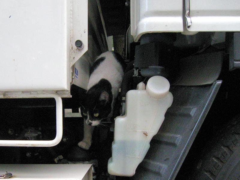 トラックを調べる白黒猫3