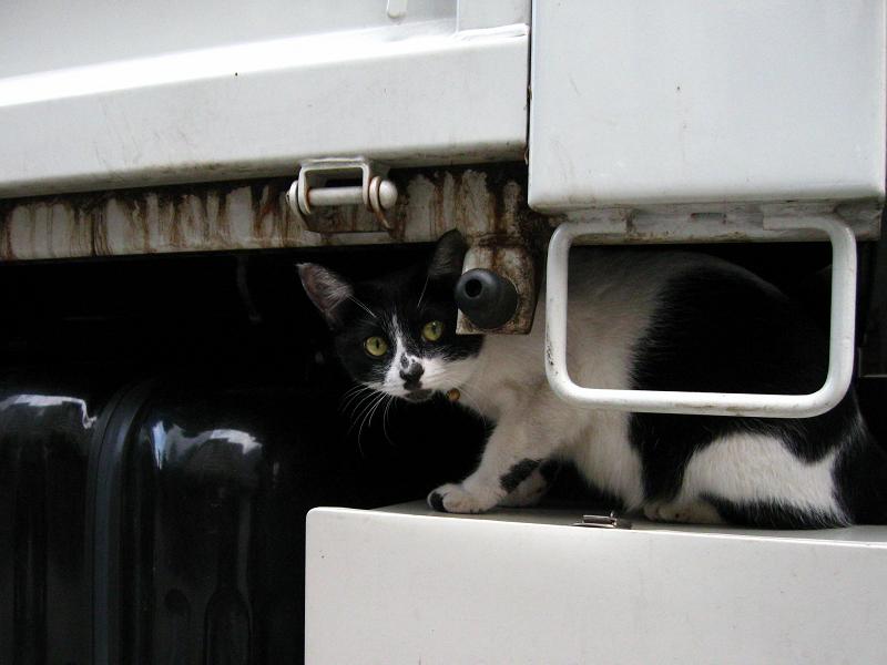 トラックを調べる白黒猫4