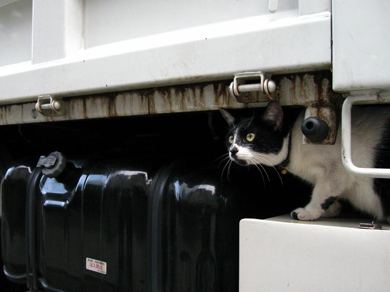 トラックを調べる白黒猫5