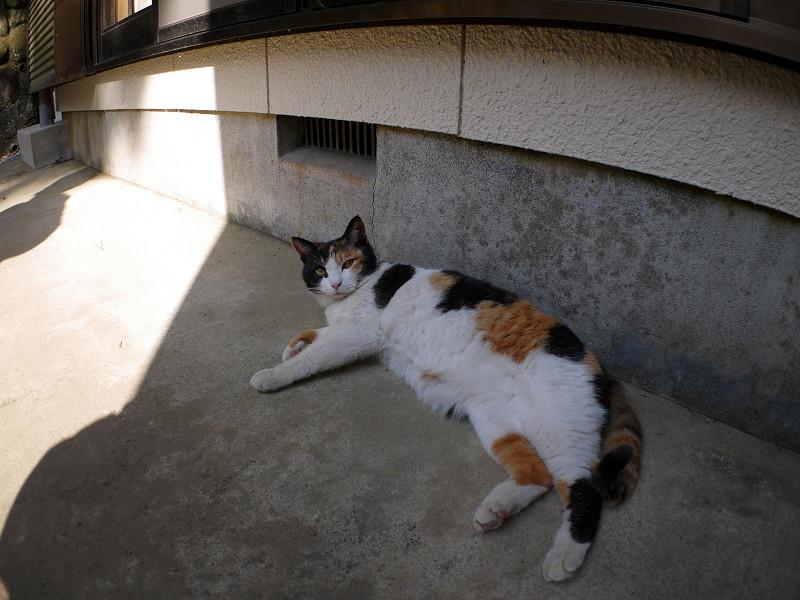 日陰の三毛猫1