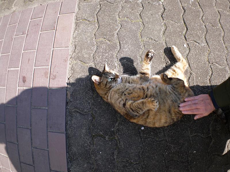 転がり続けたサビ柄猫1