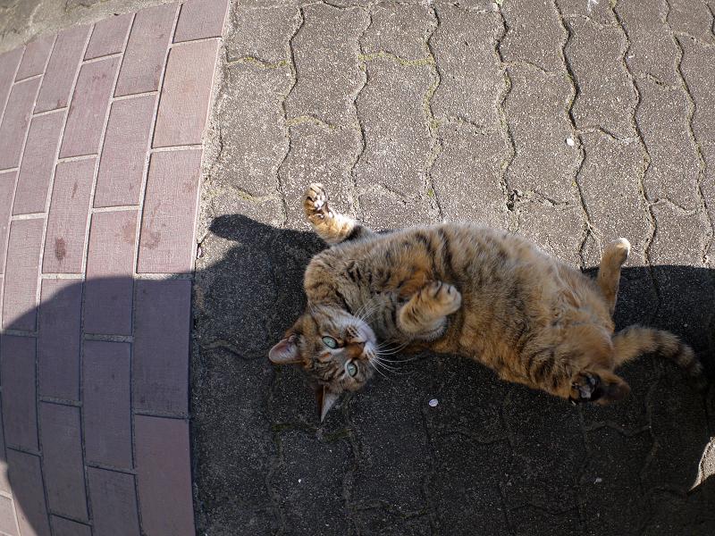 転がり続けたサビ柄猫2