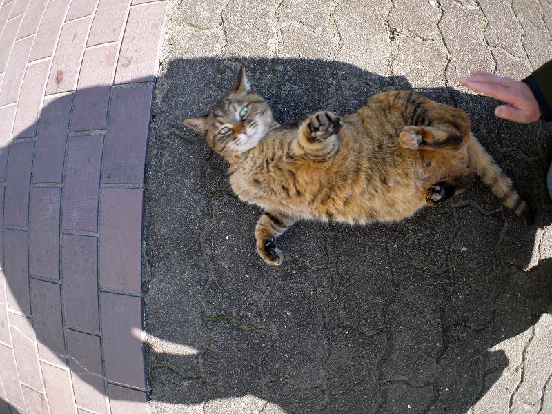 転がり続けたサビ柄猫3