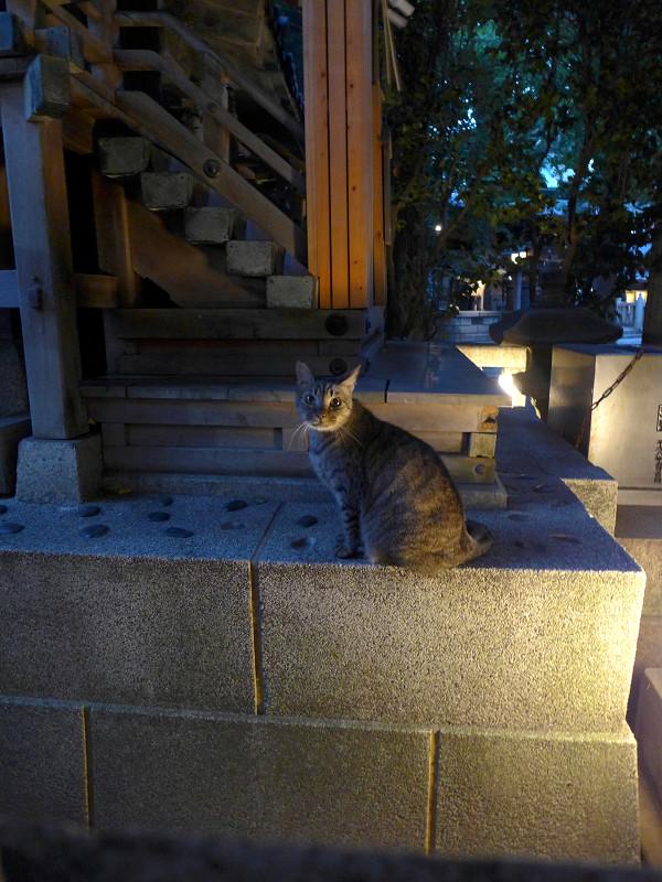 お社のキジトラ猫