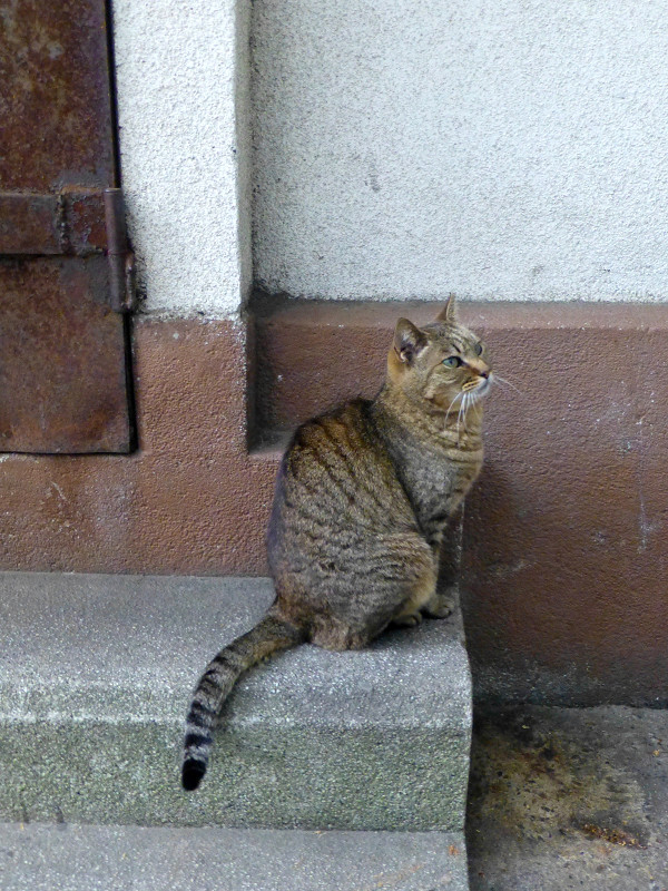 足元のキジトラ猫2