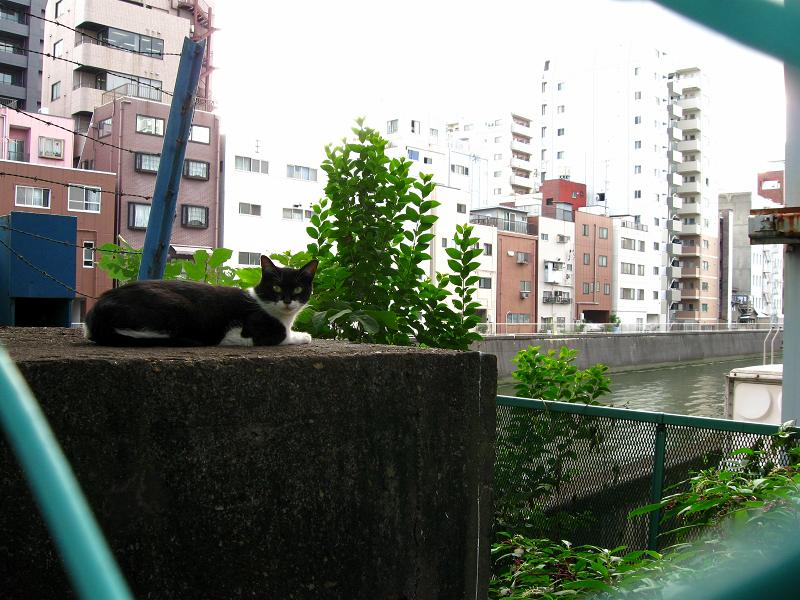 運河と黒白猫1