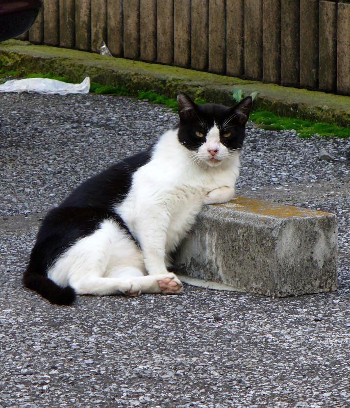 車止めと黒白猫