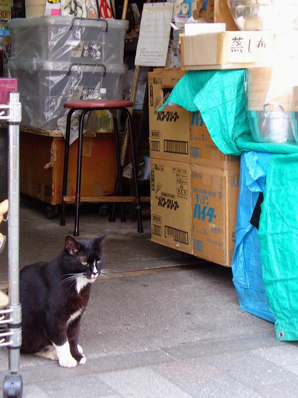 雑貨店の黒白猫1