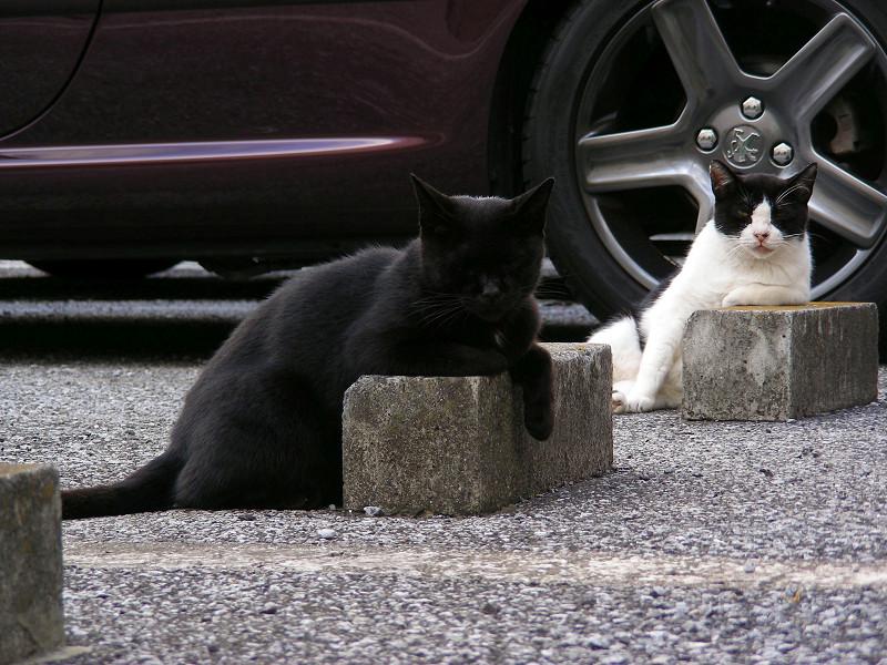 車止めと黒猫