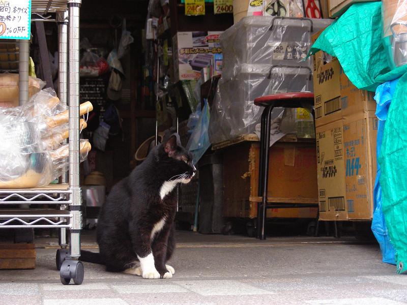 雑貨店の黒白猫2