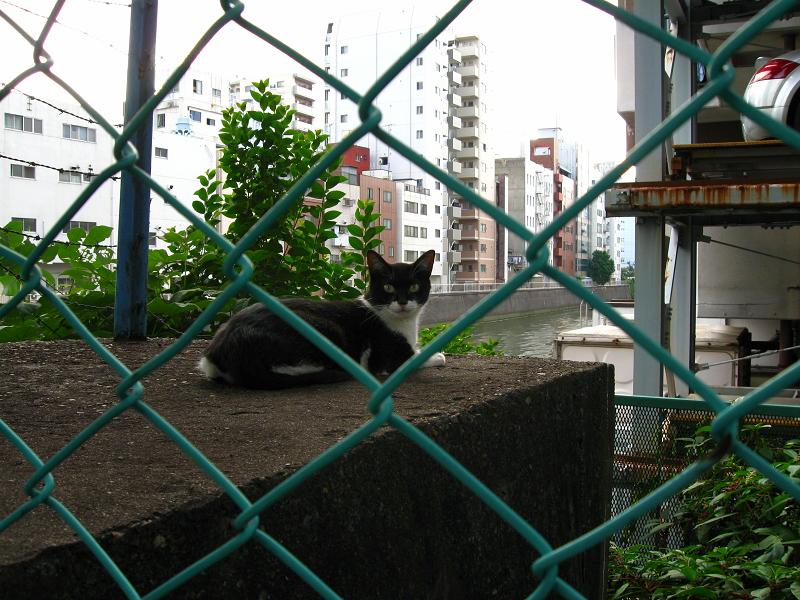 運河と黒白猫2