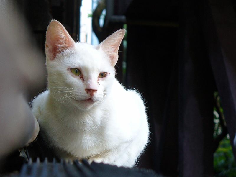 猫避けと白猫2