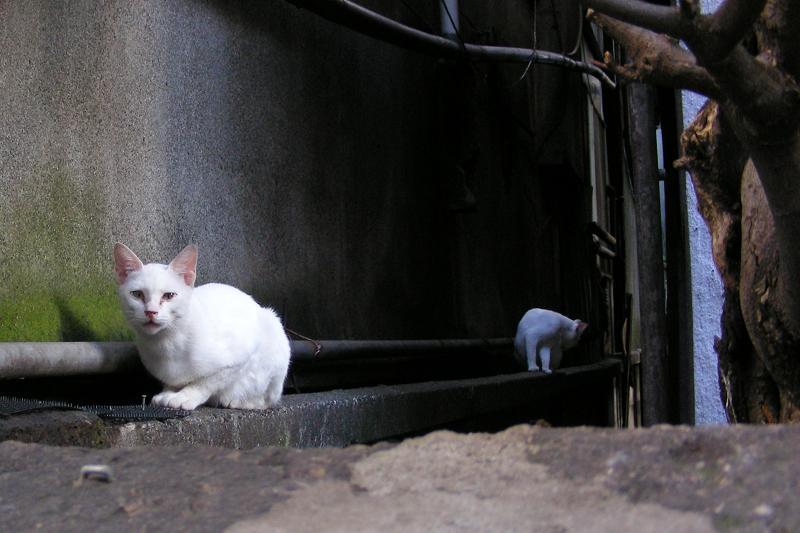 猫避けと白猫3