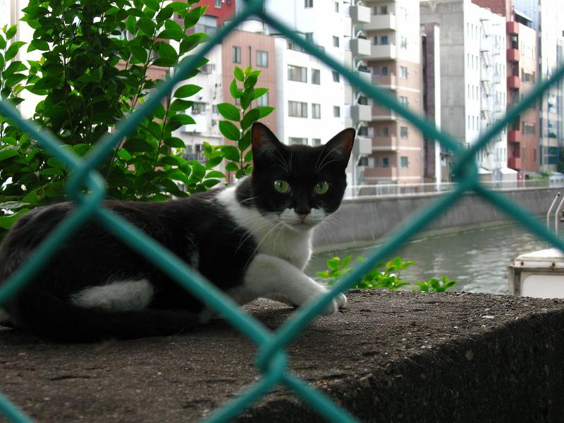 運河と黒白猫3