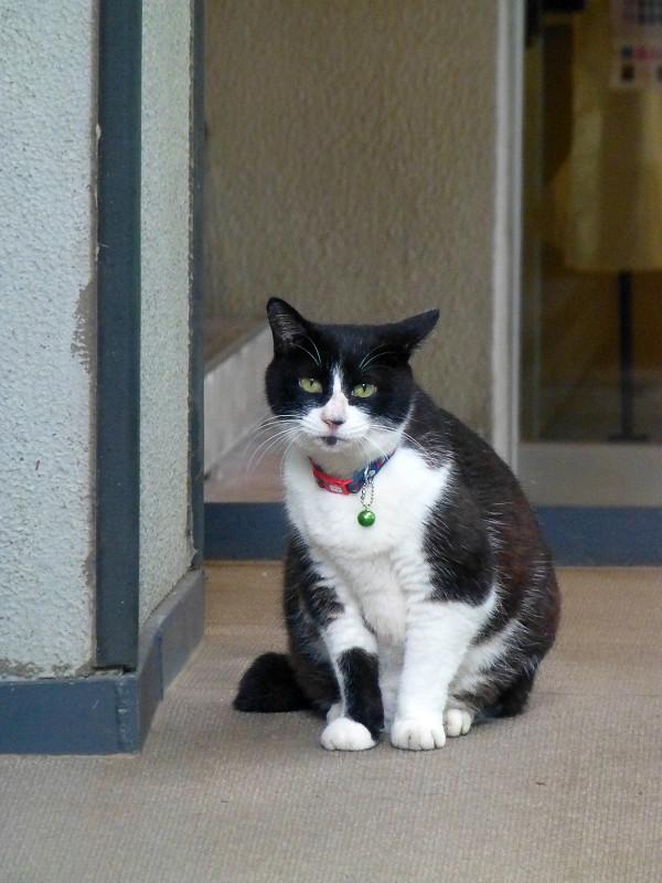 雨に濡れた黒白猫1