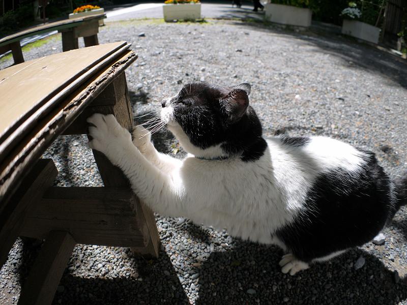 ベンチの脚で爪と研ぐ白黒猫1