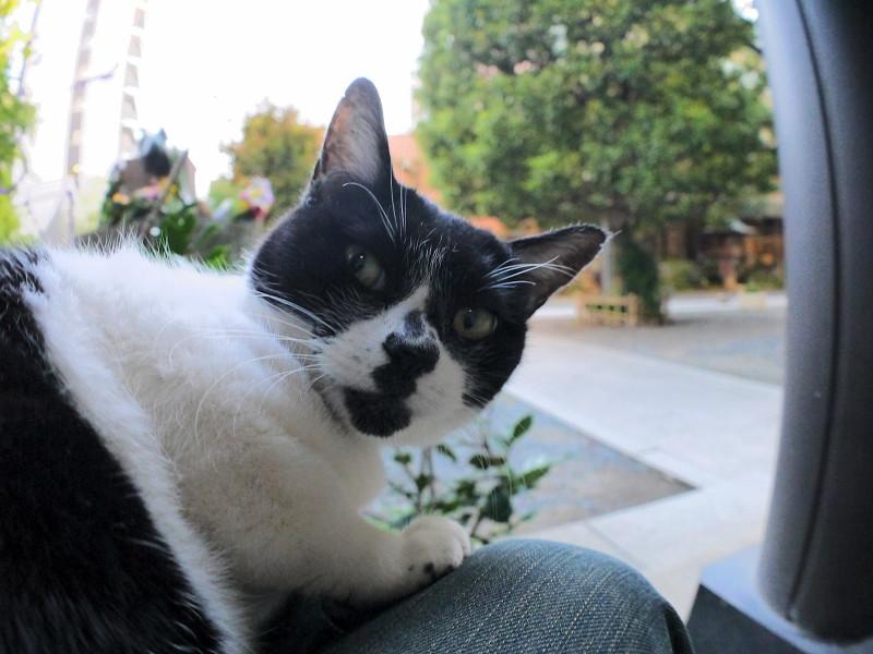驚いた表情の白黒猫1