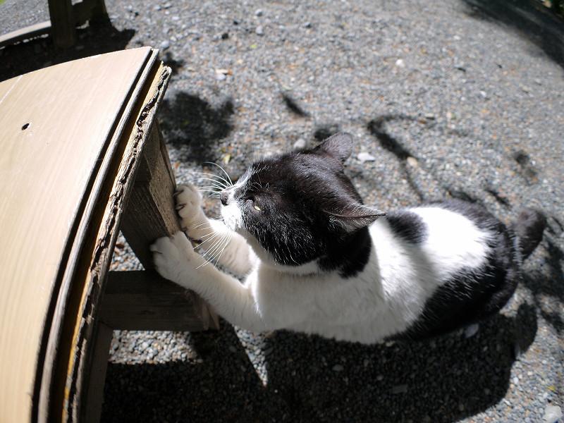 ベンチの脚で爪と研ぐ白黒猫2