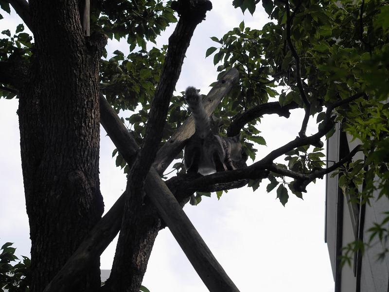 木から降りられたサバトラ猫3