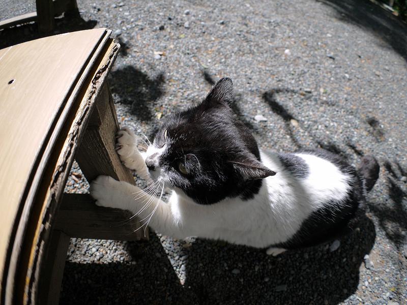 ベンチの脚で爪と研ぐ白黒猫5