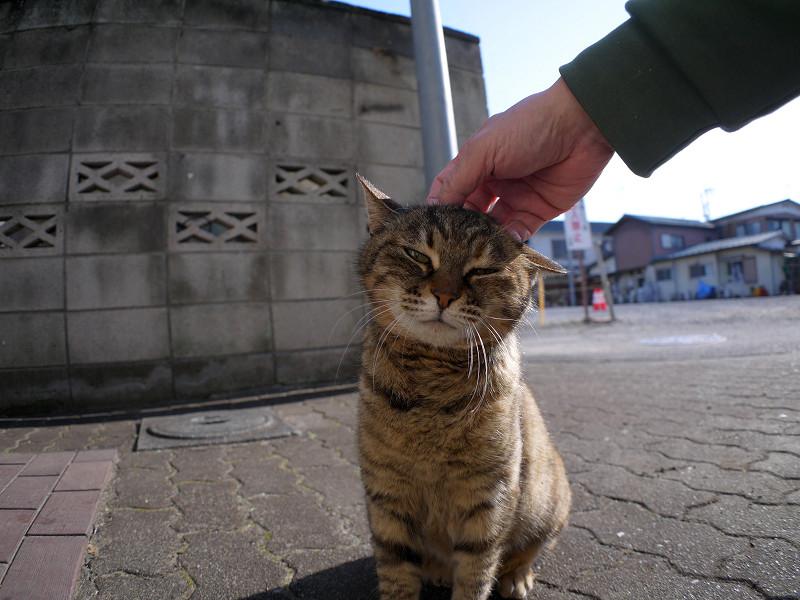 逆光の中で触られてるサビ柄猫2