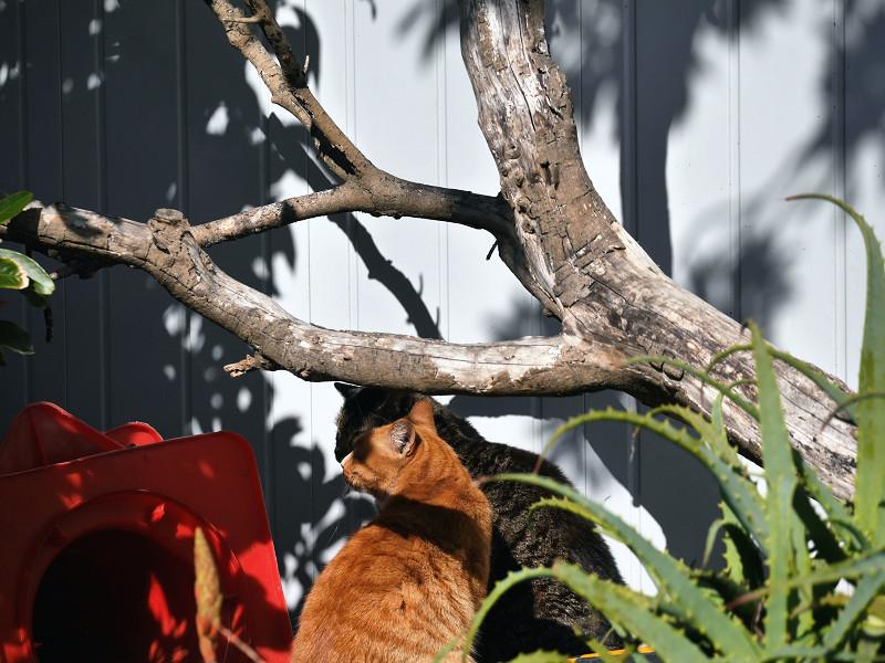木と壁と2匹の猫1