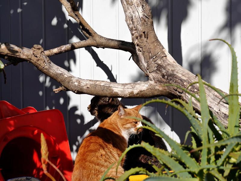 木と壁と2匹の猫2