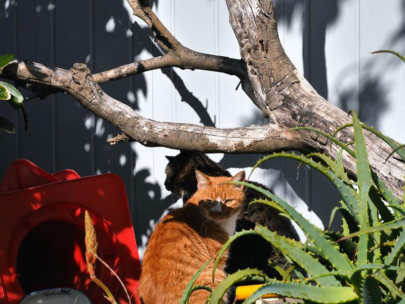 木と壁と2匹の猫3