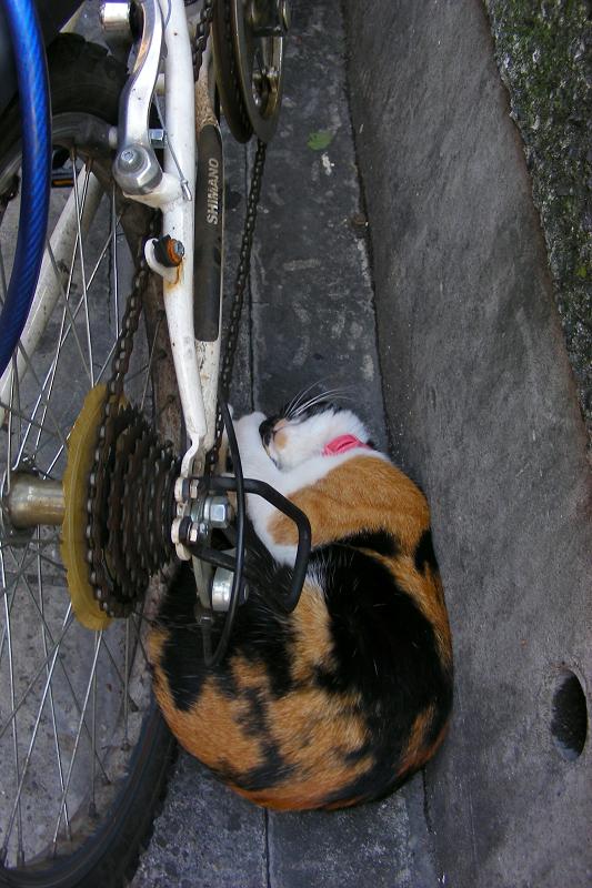 自転車と三毛猫1