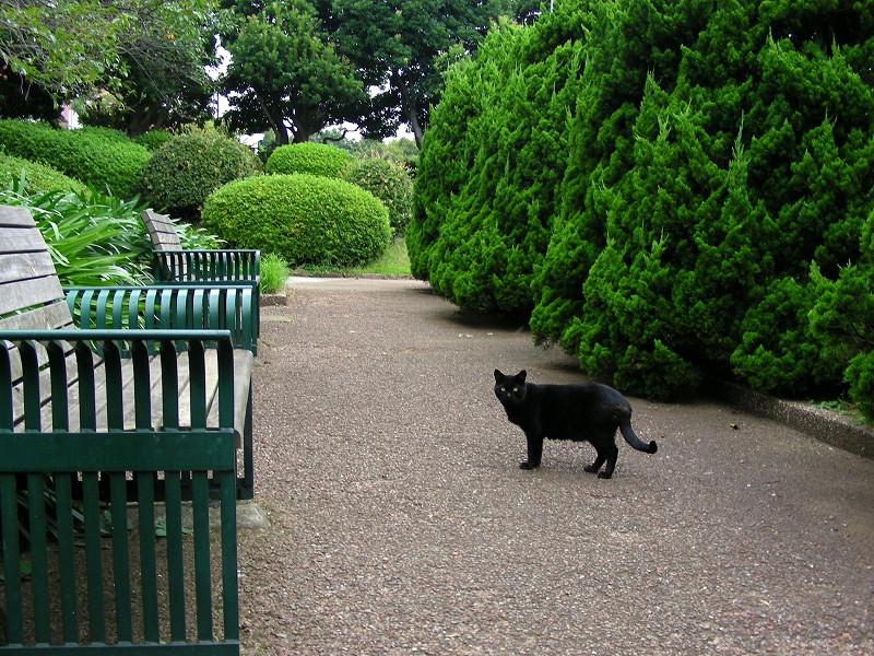 庭園の黒猫1