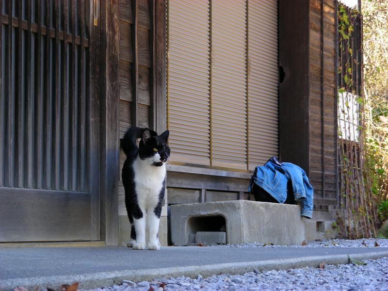 扉前の黒白猫1