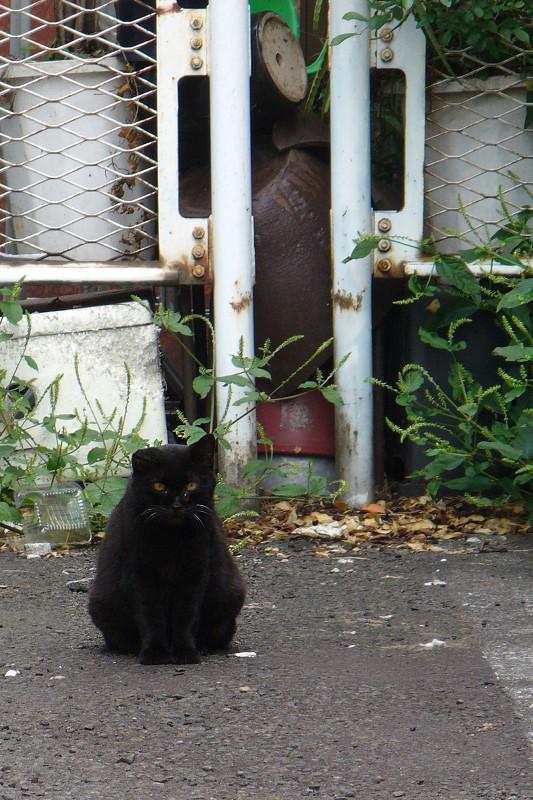 駐車場にいた黒猫1