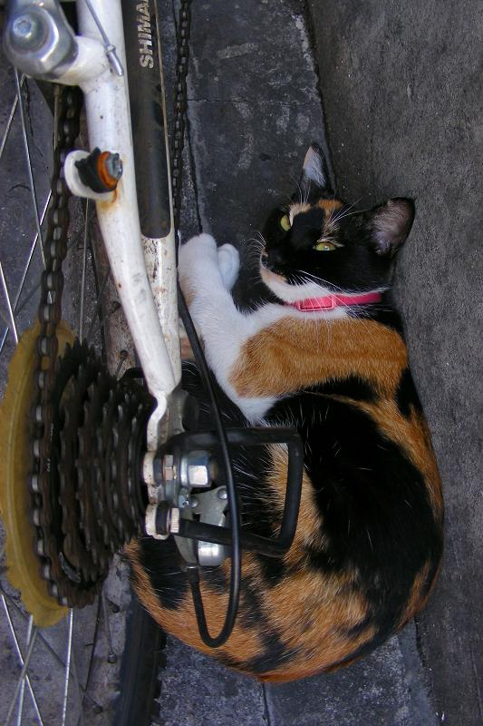 自転車と三毛猫2